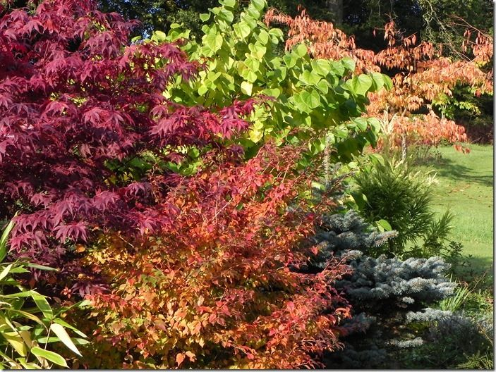 Autumn-shrubs-