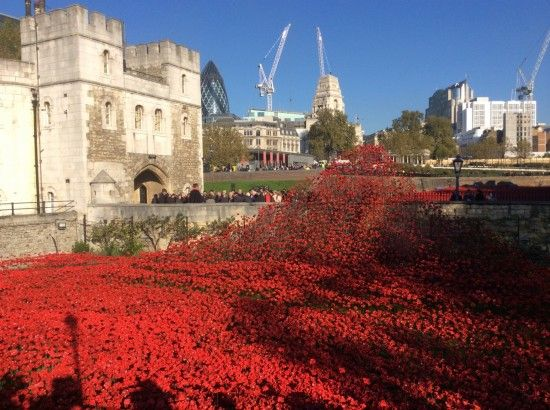 7 Visitors flock to see the Poppies