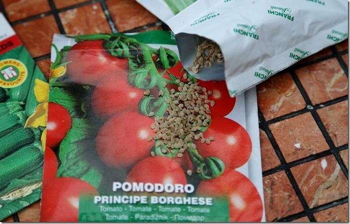 7 lots of tomato seeds