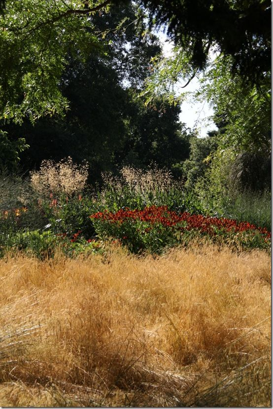 Grasses and heleniums
