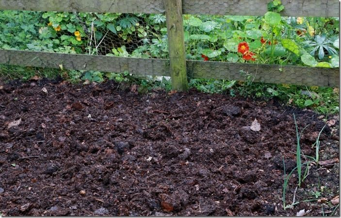 6 Compost on the vegetable plot