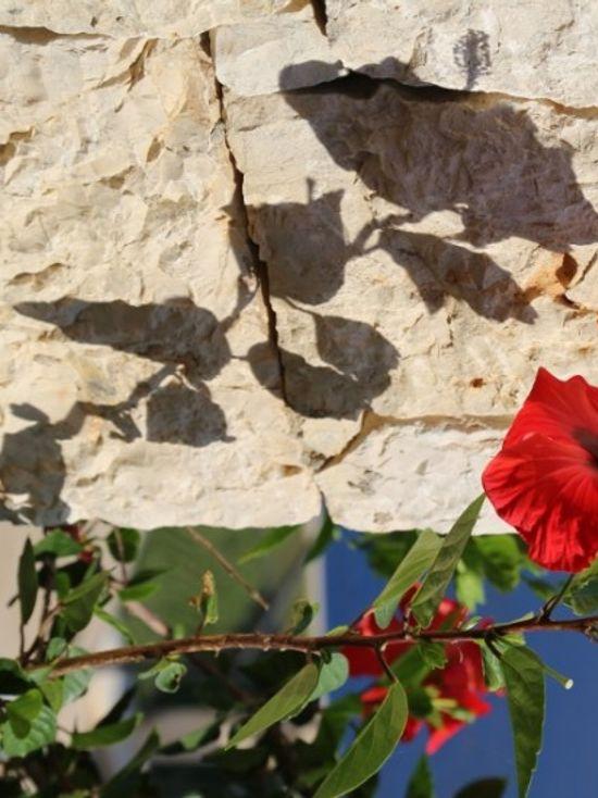 6 Hibiscus rosa-sinensis (599x800)