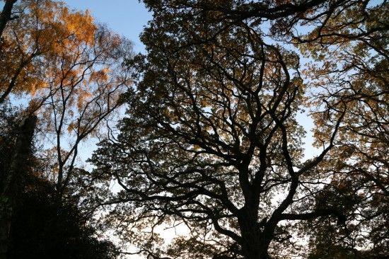 10 Oak silhouette (1280x853)