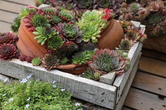 Wooden crate sculpture using sempervivums