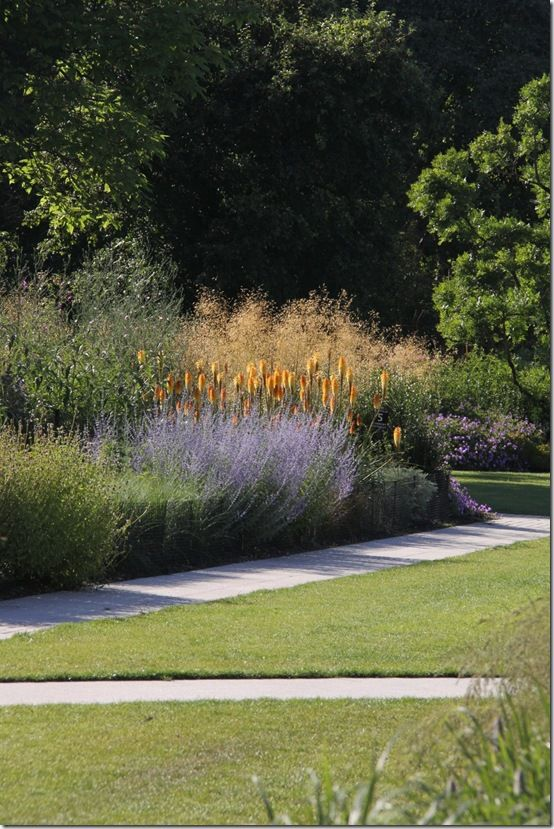Kniphofias and perovskia