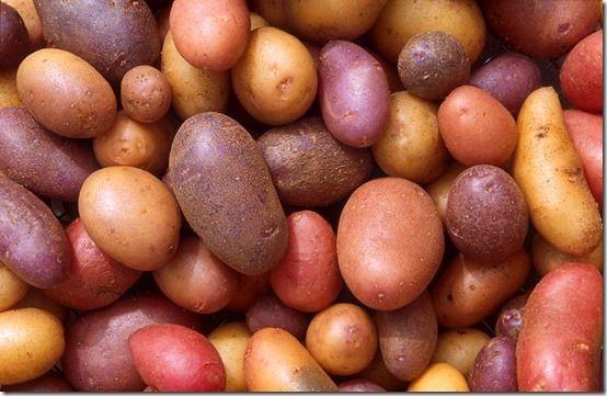 new seed potatoes
