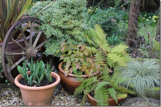 Group of pots in shade