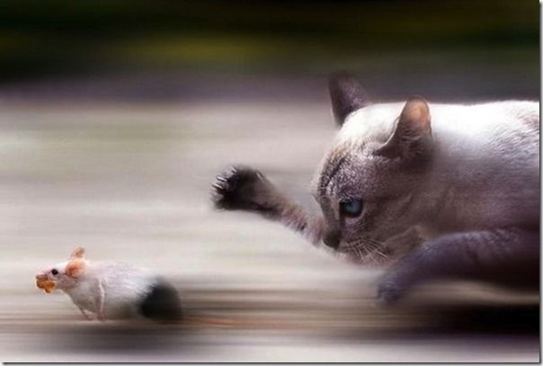 Perfectly Timed, Animal, Photography, Photos, Images, Best,
