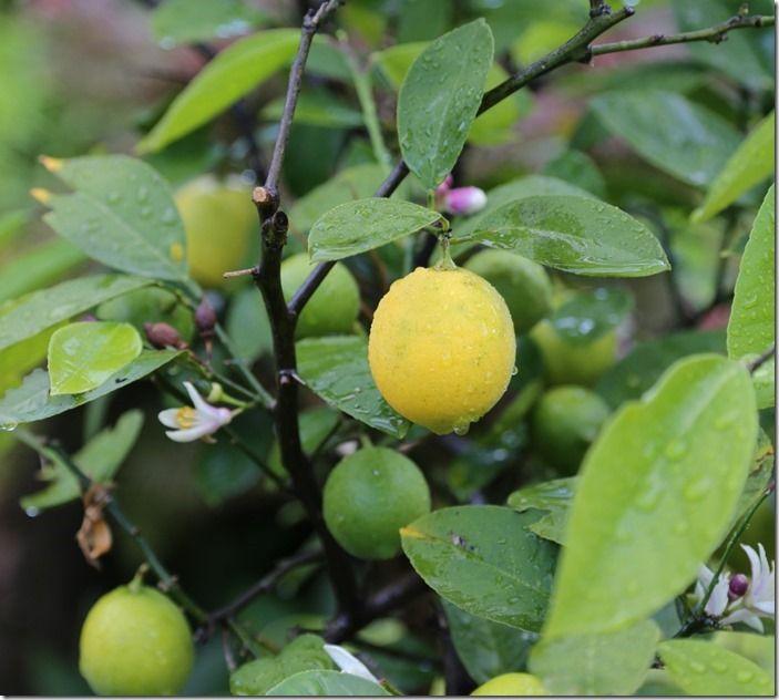 10 Citrus
