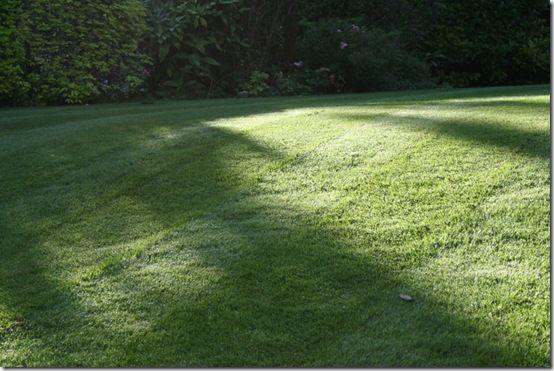 Lawn shadows