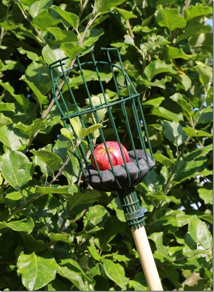 4 Fruit picker (750x1024)