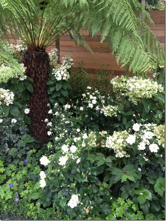tree fern and hydrangeas