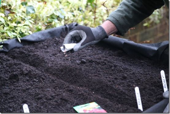 more sowing radishes and leaves