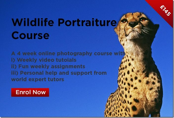 Wildlife Portraiture Course