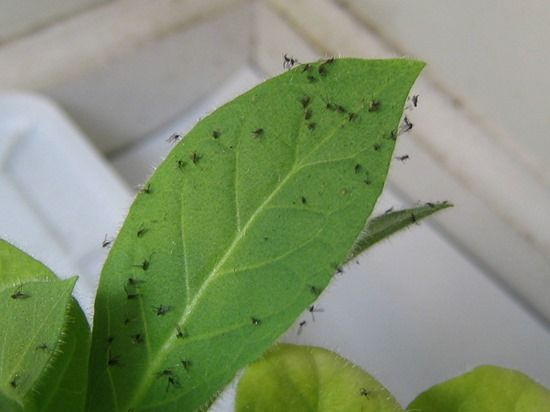 How To Control Fungus Gnats On House Plants