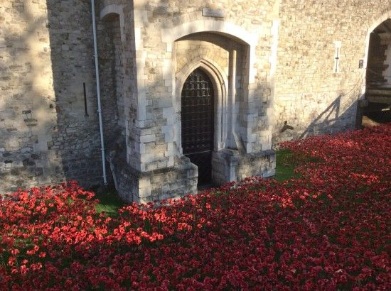 3 A carpet of poppies
