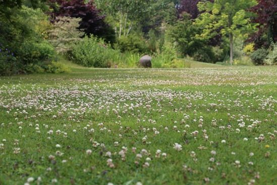 11 Clover Lawn