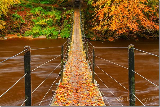 Suspension bridge over the River Allen at Allen Banks, Northumberland, England, Autumn, clour, Colour, Fall, How to Photograph Autumn Colour, How to Photograph Fall Color, Leaves, tree, trees, Woodlland