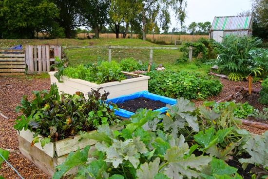7 Raised beds and compost (1280x853)