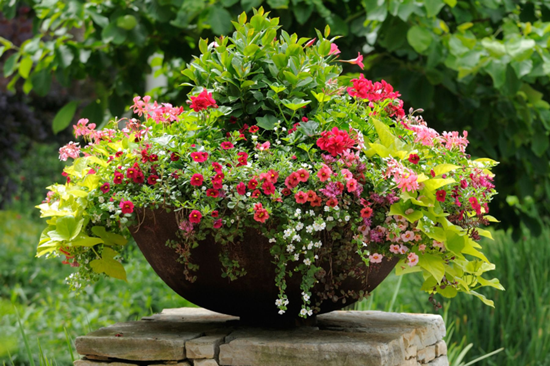Container Gardening Online Course - Learning with Experts