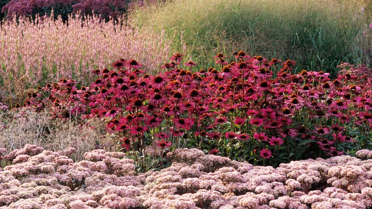Learn Planting The Piet Oudolf Way Gardening Learning With