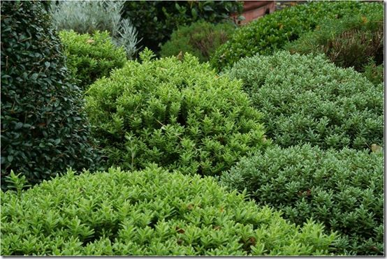 5. Spacing hebes