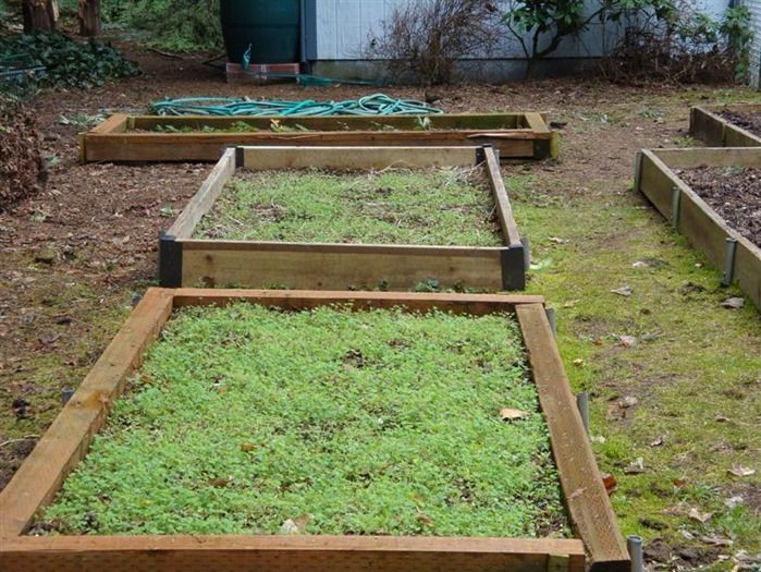 7 Green manure on raised beds