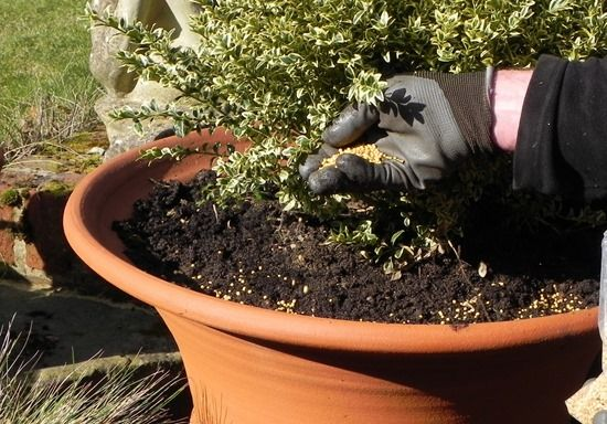 3 Adding controlled release fertiliser