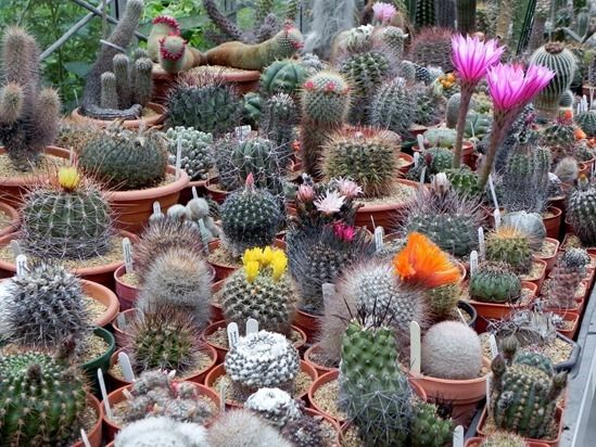 How to Grow Cacti & Succulents