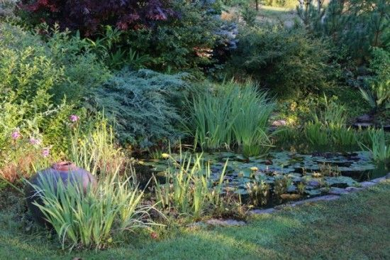 6 The pond (640x427)