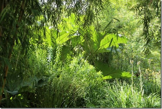 Robinsonian planting