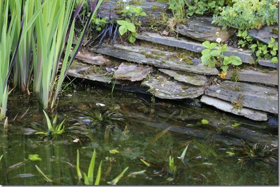 Pond edge