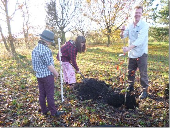 family tree planting