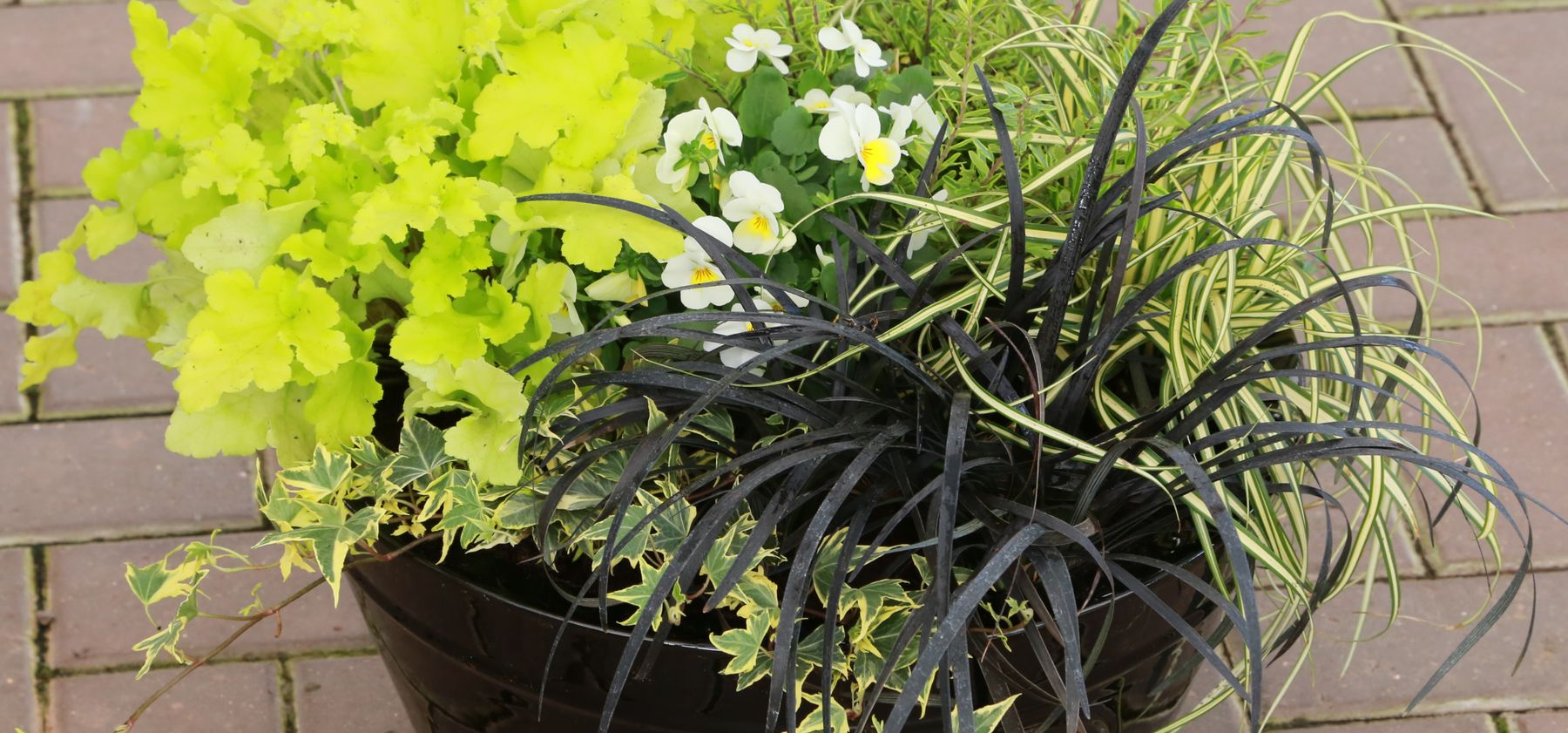 Best Plants For Autumnfall Pots Containers Gardening