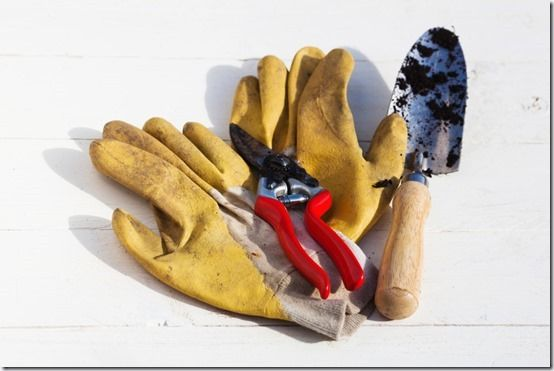 7 Gloves. pruners and trowel