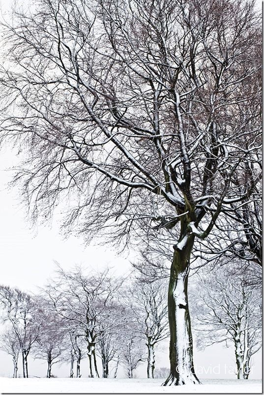 Snow-covered trees in Hardwick Park on the outskirts of the Teesdale town of Sedgewick, County Durham