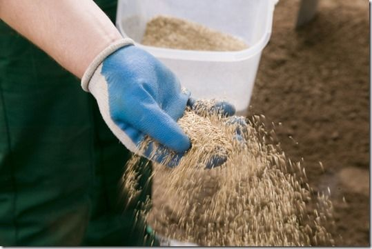 Sowing Seed by hand, Online courses, sowing a new lawn, how to sow a new lawn, grass seed, lawns, lawn seed, Lawn care, Lawn maintainance, Ground preparation, grass seed mix,