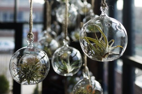 Great Tips For Bottle Gardens and Terrariums