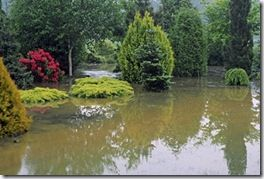 FloodedGardenMayCredAdrianBloom_L