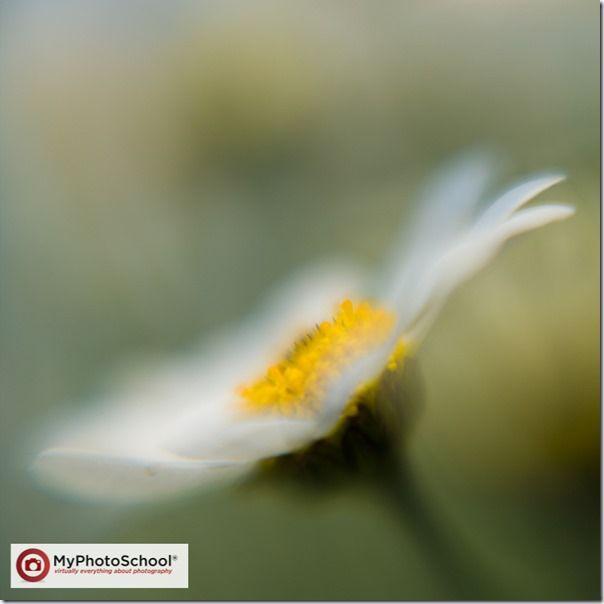 Blur, blurred, Focus, Lensbaby, soft, soft focus, unsharp, Lensbaby Composer, Lensbaby Muse, Lensbaby Control Freak