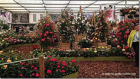 Roses Chelsea Flower Show 2014