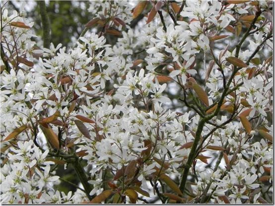 Top ten small flowering trees gardening for Top 10 trees for small gardens