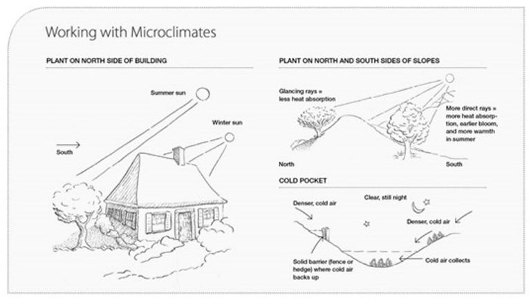 Microclimates: How To Change Your Garden's Climate