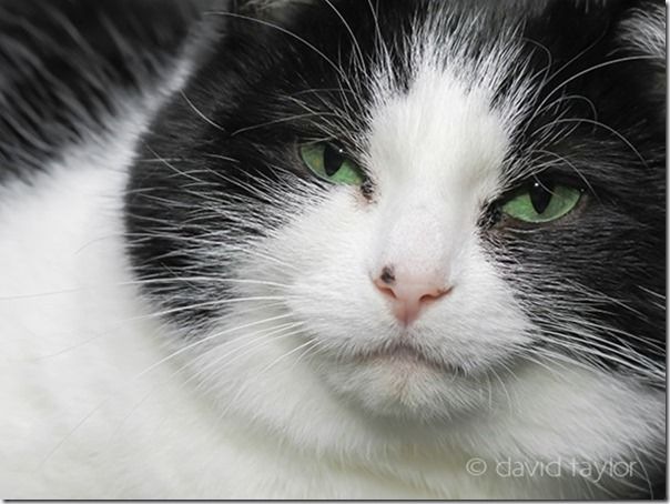Hattie the cat staring at the camera, Pet Photography, How to, Animals, Selective focus