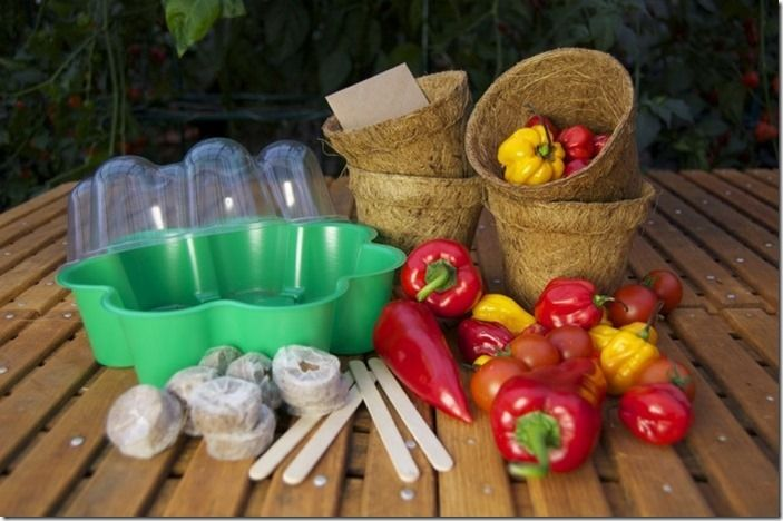 11 Vegetable growing kit