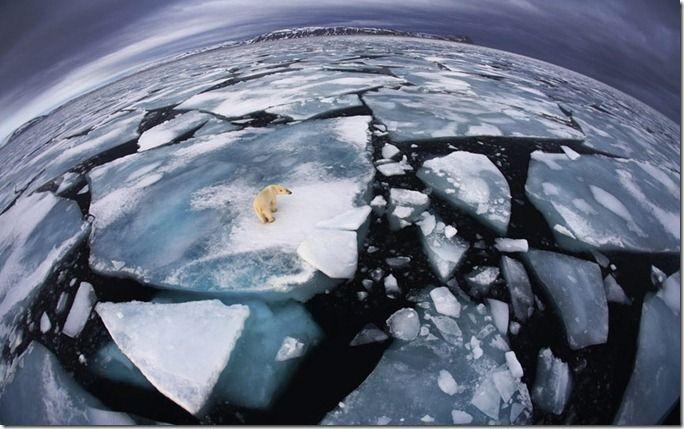 environment-polar_2371847k