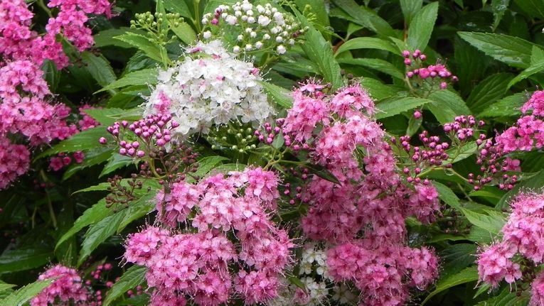 Top Recommended Shrubs For Clay Soil