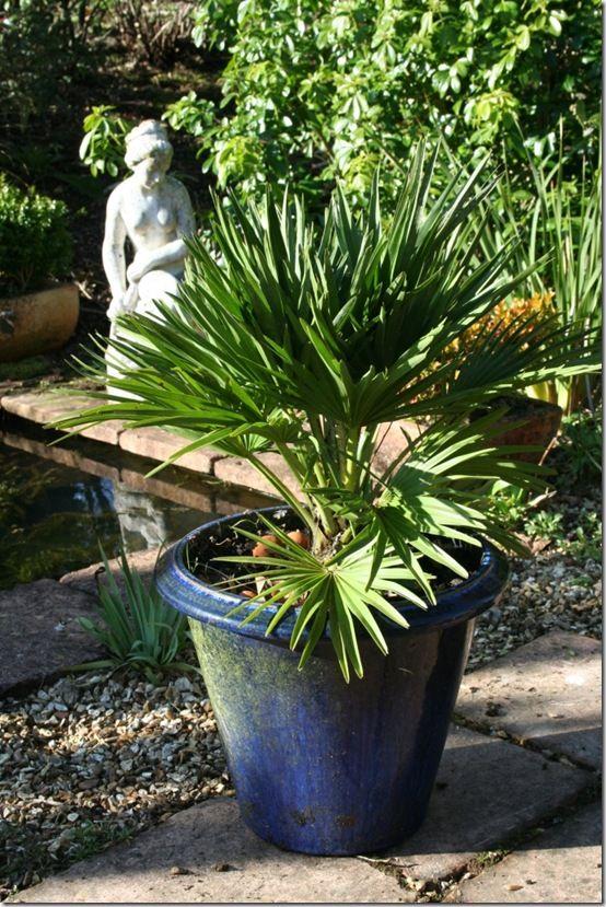 Palm pot