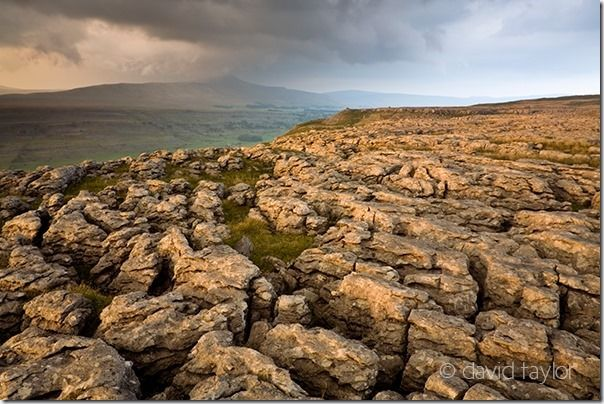 Limestone Pavement near Inglebrough in the Yorkshire Dales, England