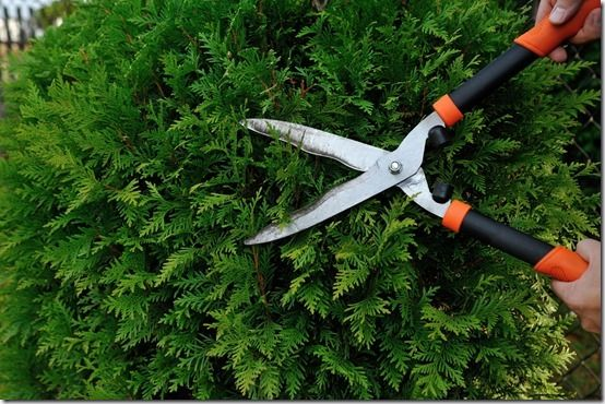 11 Light hedging shears